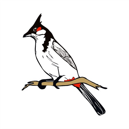 Red-whiskered bulbul bird vector