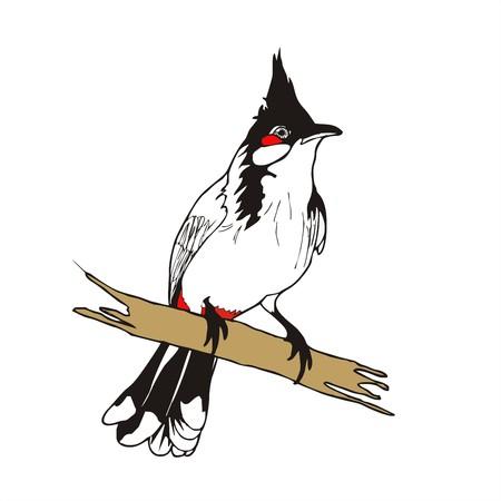 aria: Vector de aves Bulbul Rojo-barbuda
