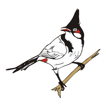 melodious: Red-whiskered bulbul bird vector