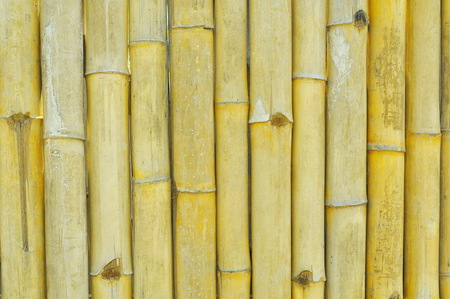 spontaneous painting: old bamboo wall texture background  Stock Photo