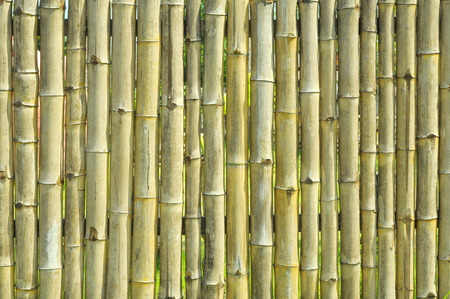 spontaneous painting: Rough bamboo wall texture background  Stock Photo
