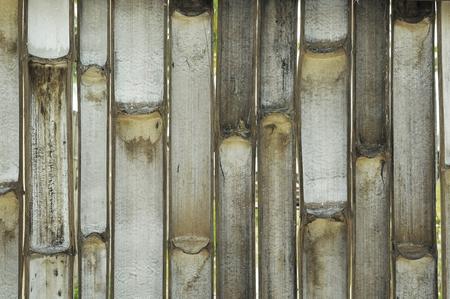 innate: all'interno Bamboo texture di sfondo