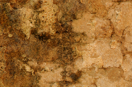 dowdy: Fungi with rough wall texture background
