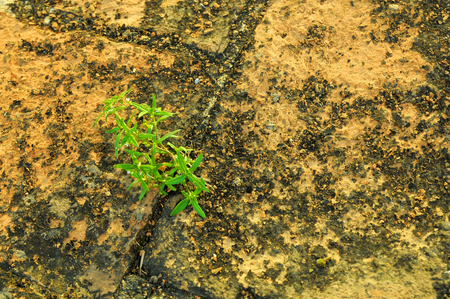 Sprout on Brick floor background photo