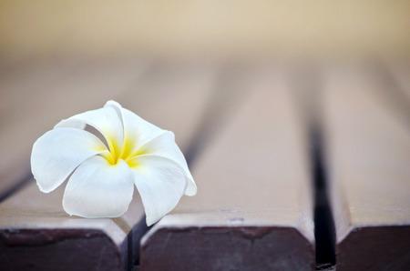 white plumeria flower on lath floor