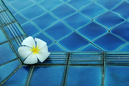 white plumeria flower on pool photo