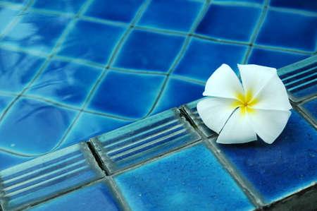 white plumeria flower on pool Stock Photo