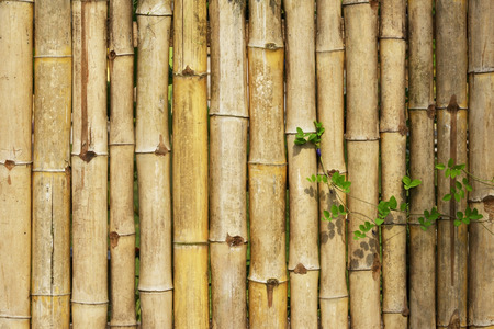 rough fence dry bamboo pattern background Stock Photo