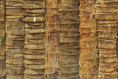 Coconut palm fence pattern background