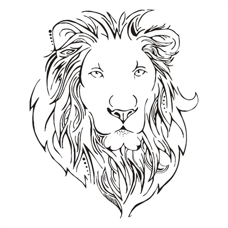 lion drawing: Lion head schizzo vettoriale