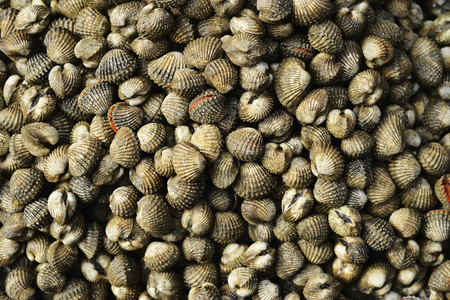 many raw cockle in seafood market background Stock Photo