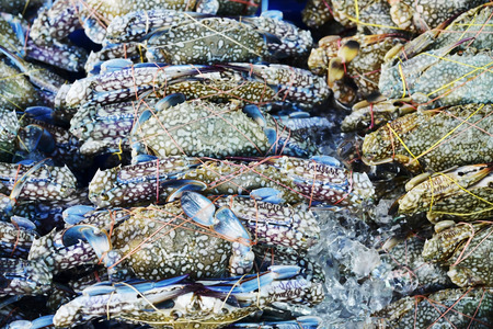 blue swimmer crab: many raw blue manna crab in seafood market Stock Photo