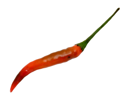 racy: one Thai red Chili pepper for make cooking with white isolate background Stock Photo