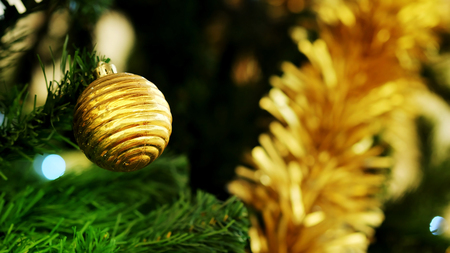 Golden Christmas ball decorate hanging on green pine tree for happy festival