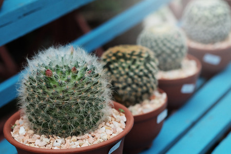Hobby gardening with many of sprout cactus in Nursery  garden for sale make money