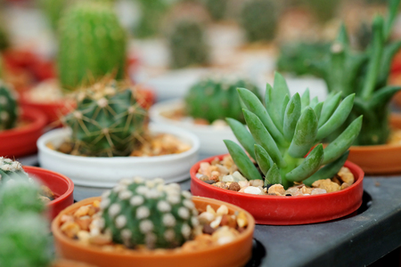 avocation: Hobby gardening with many of sprout cactus in Nursery garden for sale make money