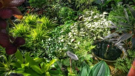 Tropical plants decorative green plants and seedlings nursery in garden shop