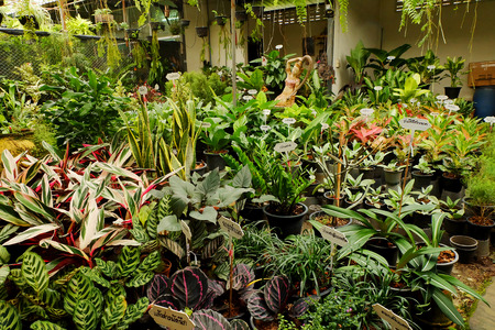 tropical plant and flower gardening shop. Business selling for decorate home gardening