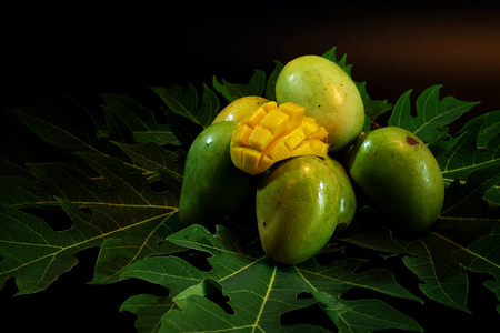 Group of fresh local mango tropical fruits of Thailand on papaya leaf with black background.have some space for write wording