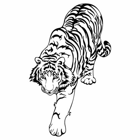 Tiger walk to hunt doodle ink drawing design for vector tattoo isolated with white background