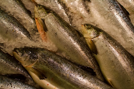 The fresh river fish cooled on ice Stock Photo - 16841783
