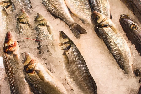 The fresh sea fish cooled on ice Stock Photo - 16855966