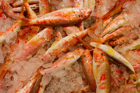 The small red sea small fish on ice Stock Photo - 16841786