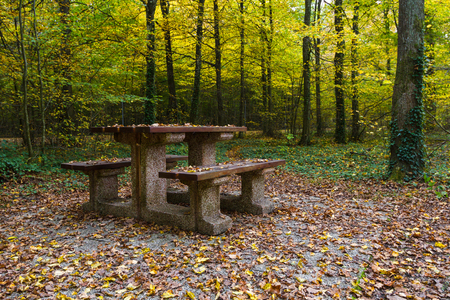 Table in the autumn wood