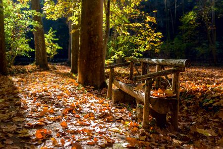Wooden bench in the autumn park covered with yellow fallen leaves. Stock Photo