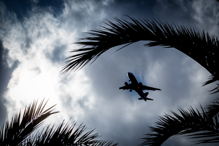 Airliner silhouette in the sky against the background of silhouettes of leaves of palm trees.