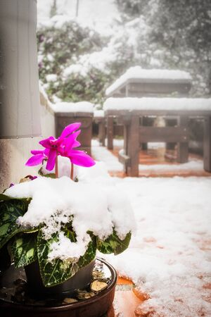 Snow the covered red flower and furniture in a garden Stock Photo