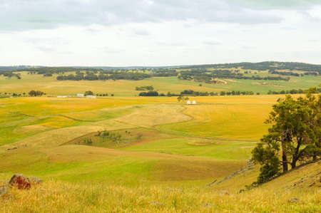 Barley fields top view before harvest at summer.