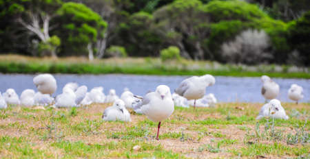 Sea gulls resting on the shore.