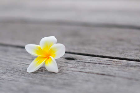 Tropical flowers frangipani background on wood 免版税图像