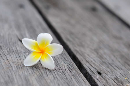 Tropical flowers frangipani background on wood Archivio Fotografico