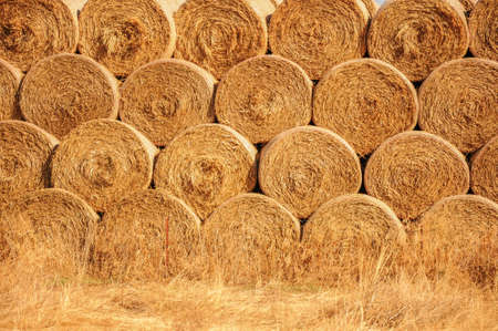 hay and straw bales in the end of summer 免版税图像