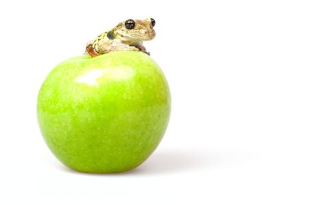 tree frog sits on a green juicy apples on pure white background photo