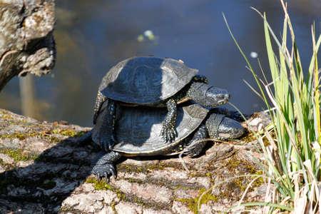 frhling: Schildkröte