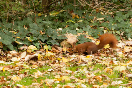 predecessor: Squirrels