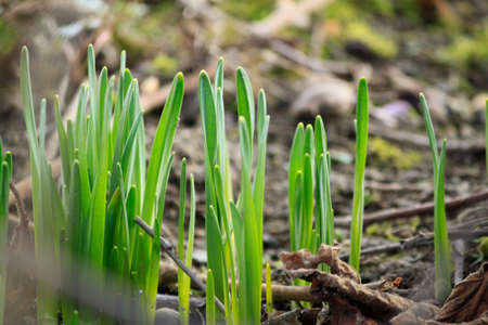 heralds: Heralds of spring in a harsh environment