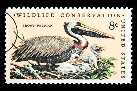 UNITED STATES AMERICA - CIRCA 1973: A postage stamp printed in the USA showing a brown pelican bird, circa 1973