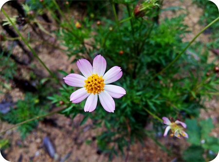 lonely bloomed flower