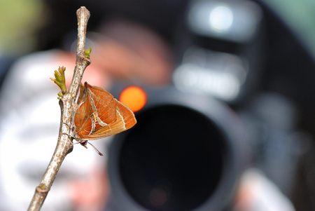 18 20: Butterfly Taiwan