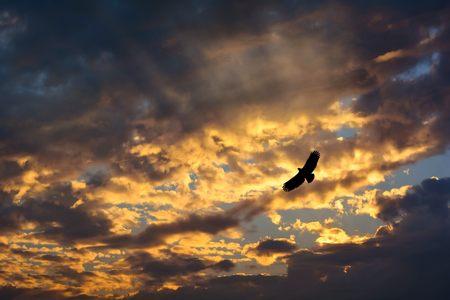 adler silhouette: Adler fliegen auf Sonnenuntergang