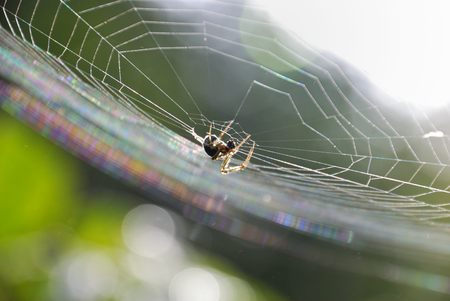 the backlighting: Spider making a web in the Backlighting.