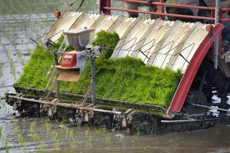 transplant: Transplant rice seedlings machine Stock Photo
