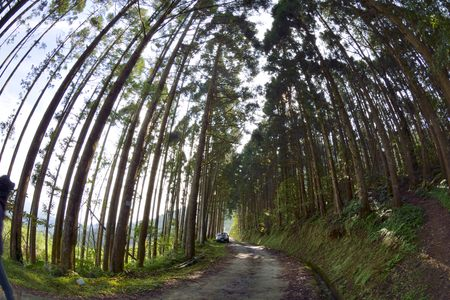hedges: Hedges forest in Hsinchu, Taiwan Luoshan Lin Road Stock Photo