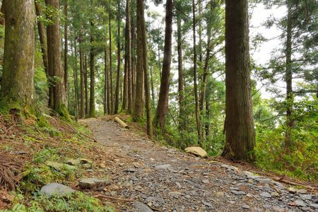Tree in a forest, Forest in the Hsinchu, Taiwan Stock Photo