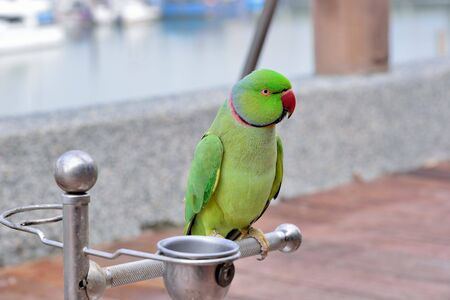 The colorful parrot (Ara ararauna) is on the seashore in Taiwan.