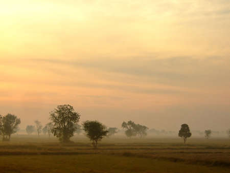countryside field in late the fog , with beautiful sunlight ,